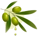 Olive oil from Nurayn Group Int'l